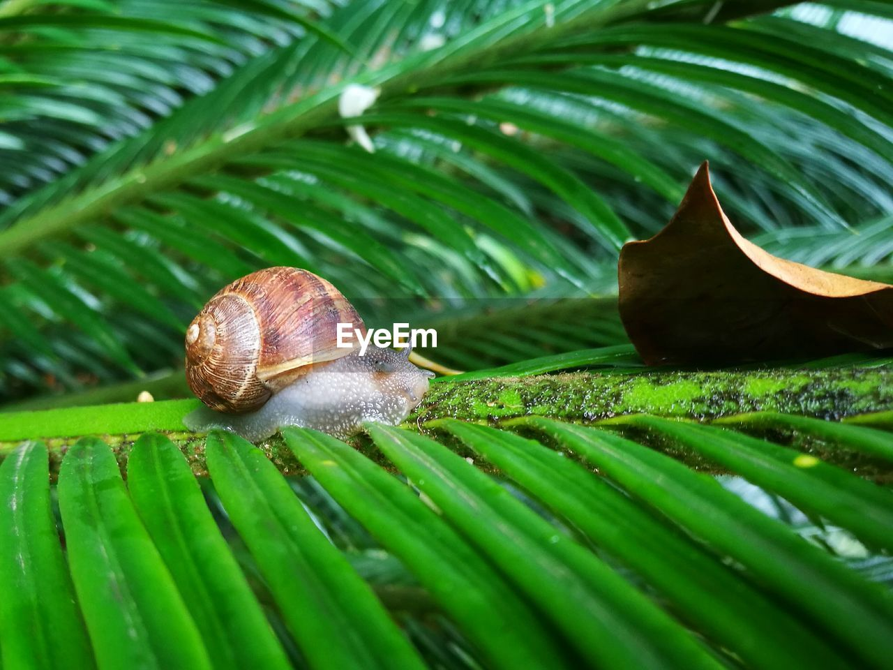 mollusk, gastropod, shell, green color, animal wildlife, leaf, plant part, animal, snail, animal themes, invertebrate, close-up, animal shell, one animal, nature, growth, plant, animals in the wild, no people, day, outdoors, leaves, palm leaf