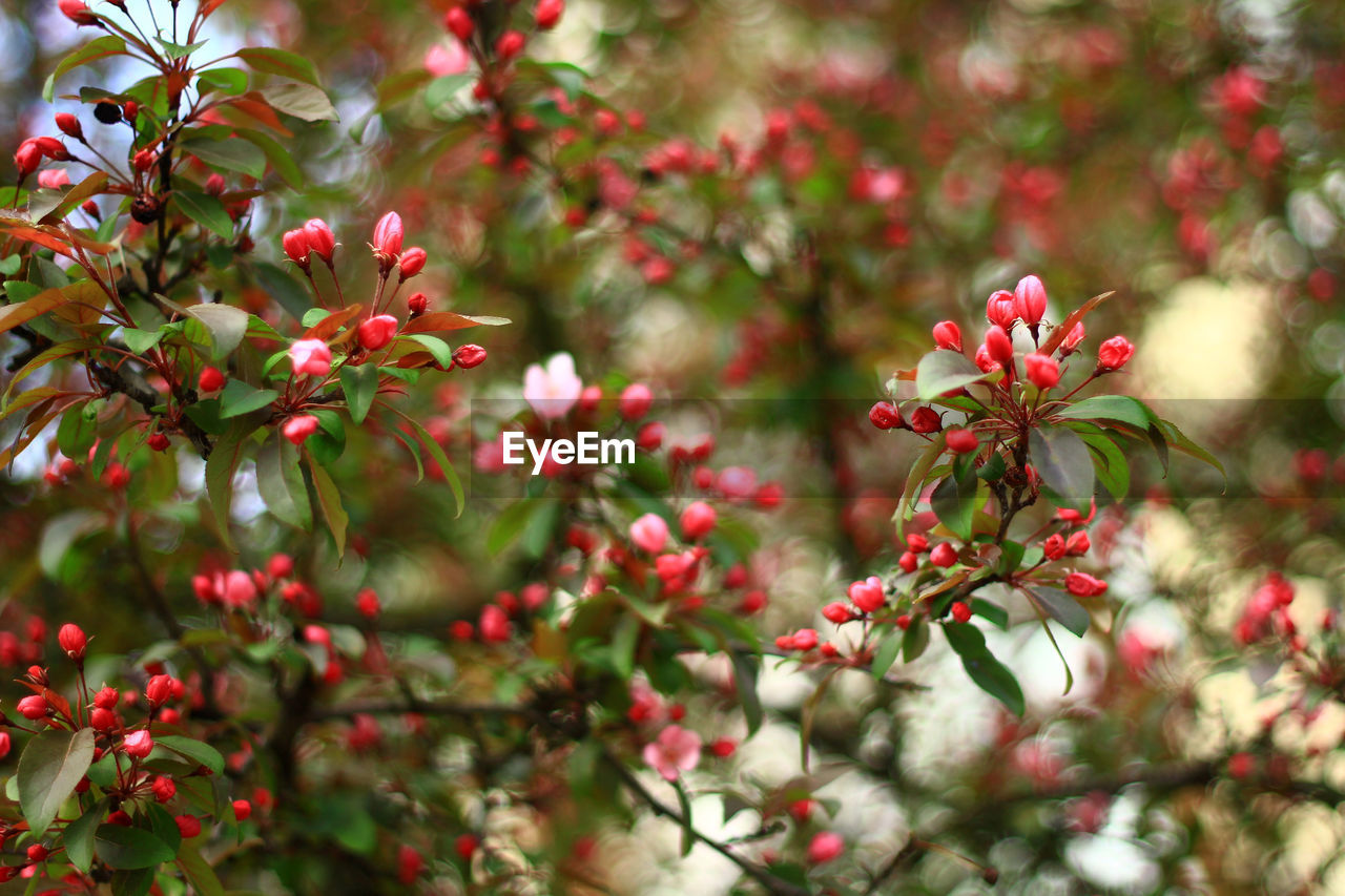 Close-Up Of Red Flowers On Tree