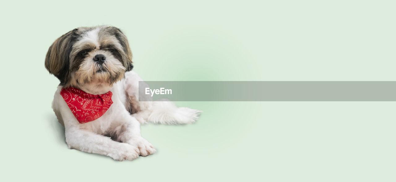 PORTRAIT OF A DOG SITTING ON FLOOR