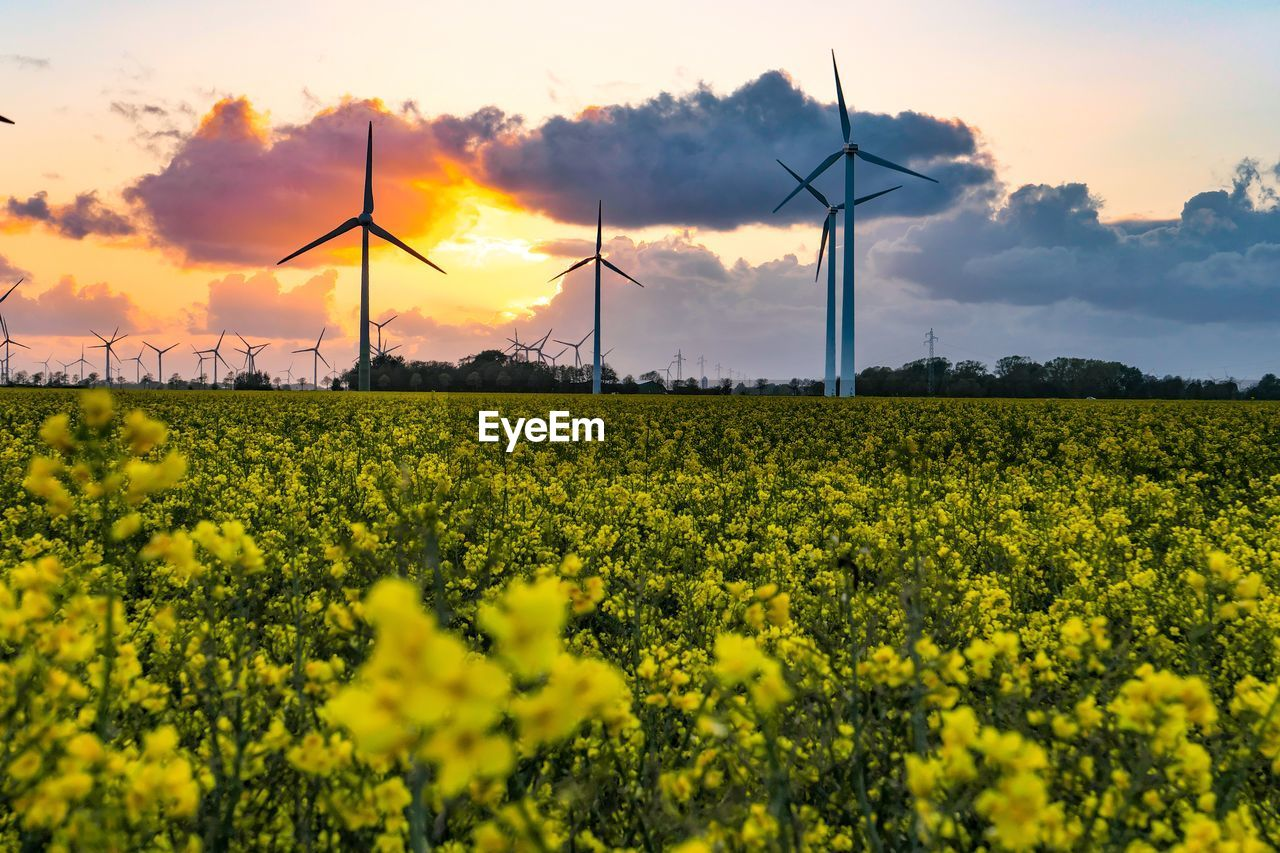 fuel and power generation, environment, wind turbine, alternative energy, renewable energy, turbine, field, environmental conservation, sky, wind power, landscape, rural scene, agriculture, yellow, land, technology, nature, flower, beauty in nature, sunset, no people, outdoors, electricity, power supply