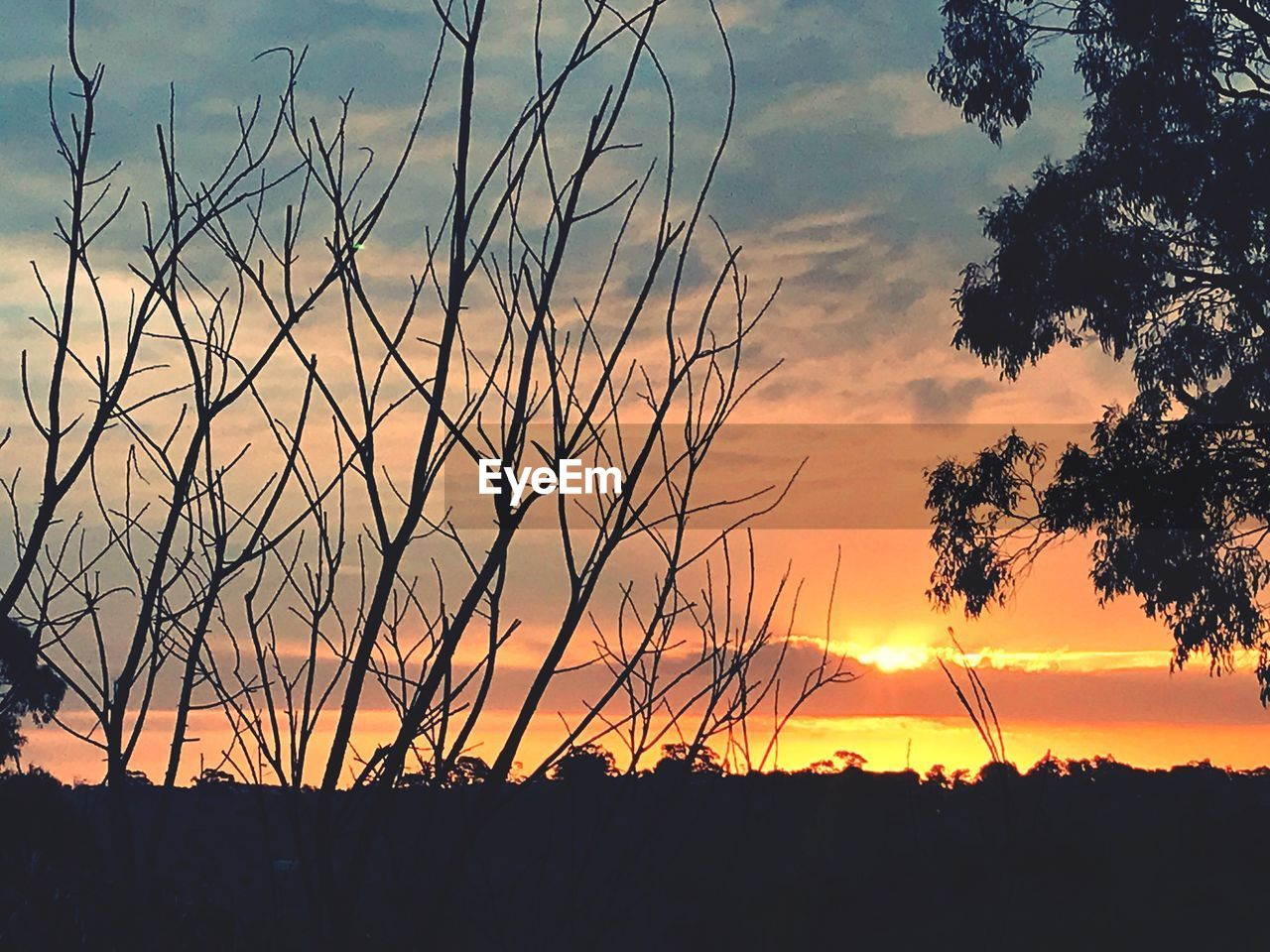 sunset, sky, beauty in nature, plant, silhouette, tranquility, scenics - nature, orange color, tranquil scene, cloud - sky, tree, no people, growth, nature, idyllic, water, non-urban scene, outdoors, sun