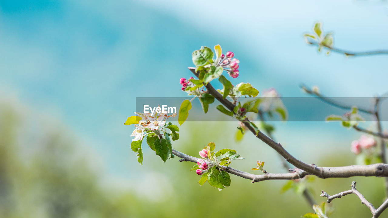 flower, growth, beauty in nature, fragility, nature, botany, no people, petal, blossom, freshness, day, branch, tree, springtime, outdoors, flower head, close-up, blooming, low angle view