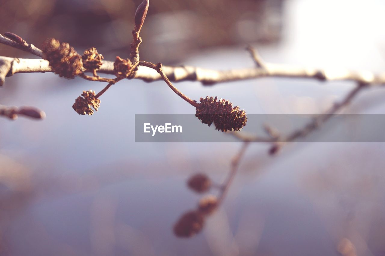 nature, twig, branch, tree, beauty in nature, plant, outdoors, winter, day, fragility, growth, no people, close-up, cold temperature, flower, freshness