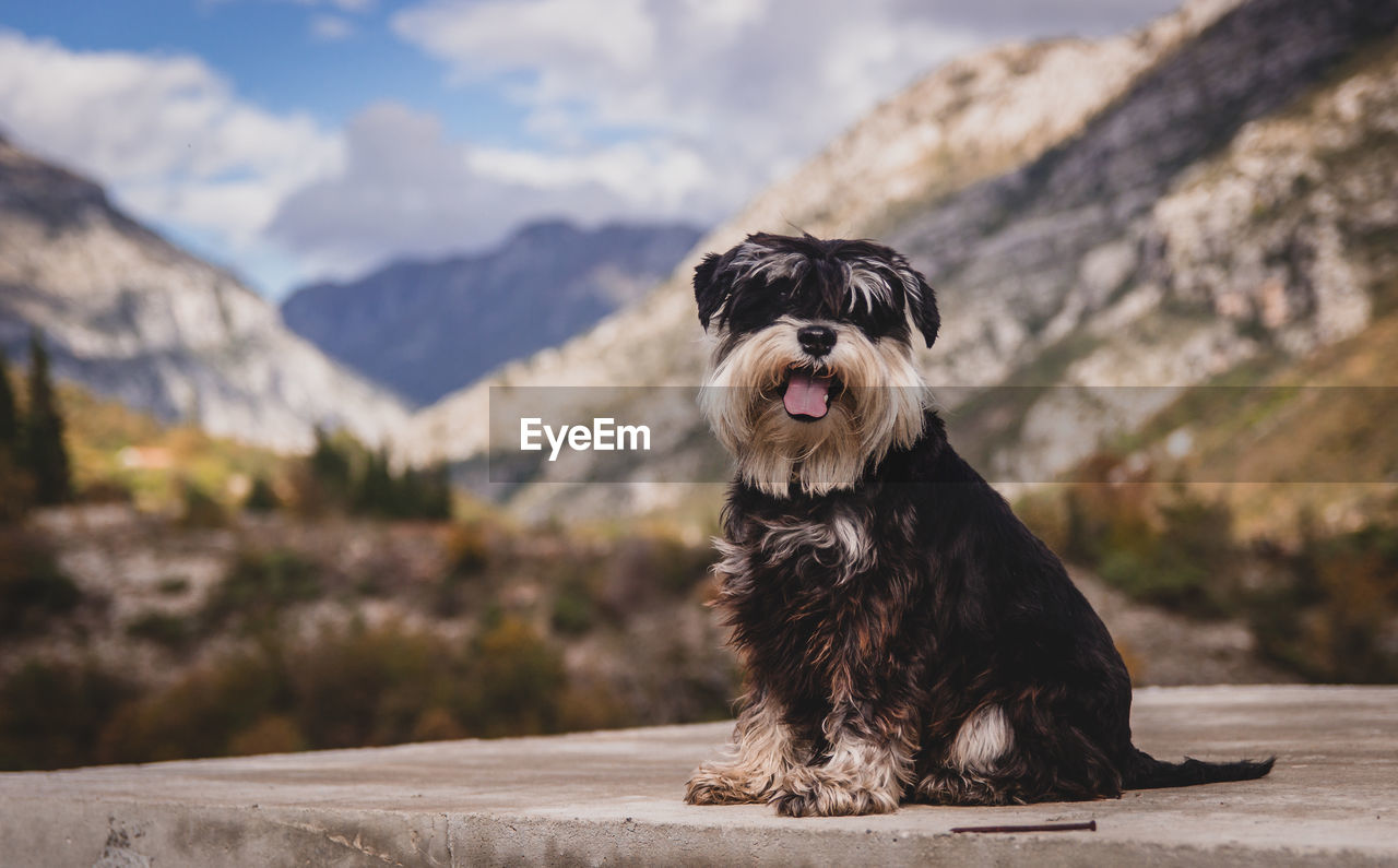 Dog Sitting Against Mountain