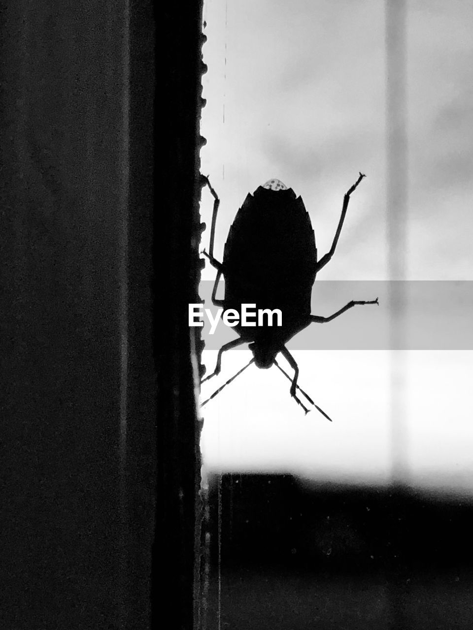 invertebrate, animal themes, animal wildlife, animal, animals in the wild, one animal, insect, close-up, window, no people, focus on foreground, glass - material, day, outdoors, nature, wall - building feature, silhouette, transparent, animal body part