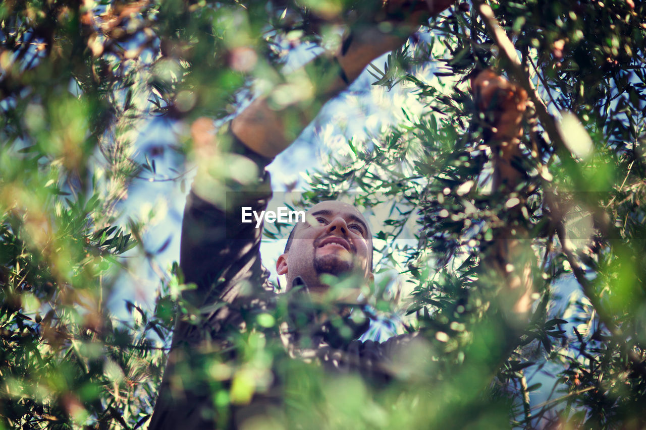 Low Angle View Of Man On Tree