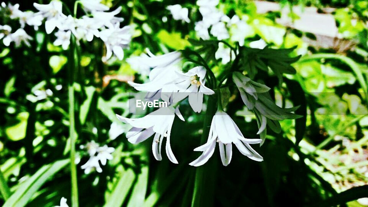 flower, petal, white color, fragility, growth, nature, flower head, beauty in nature, freshness, plant, day, leaf, close-up, no people, blooming, outdoors, animal themes