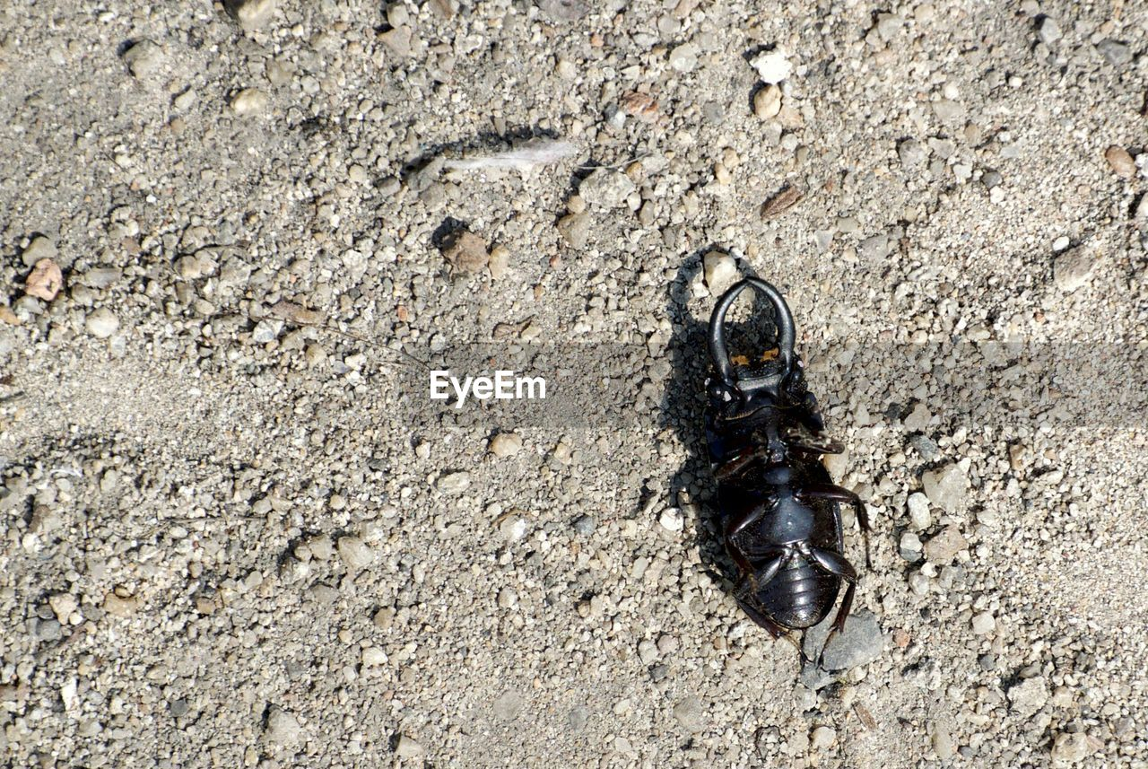 High Angle View Of Insect On Field