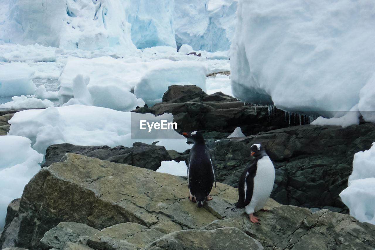 Penguins on rock by glacier