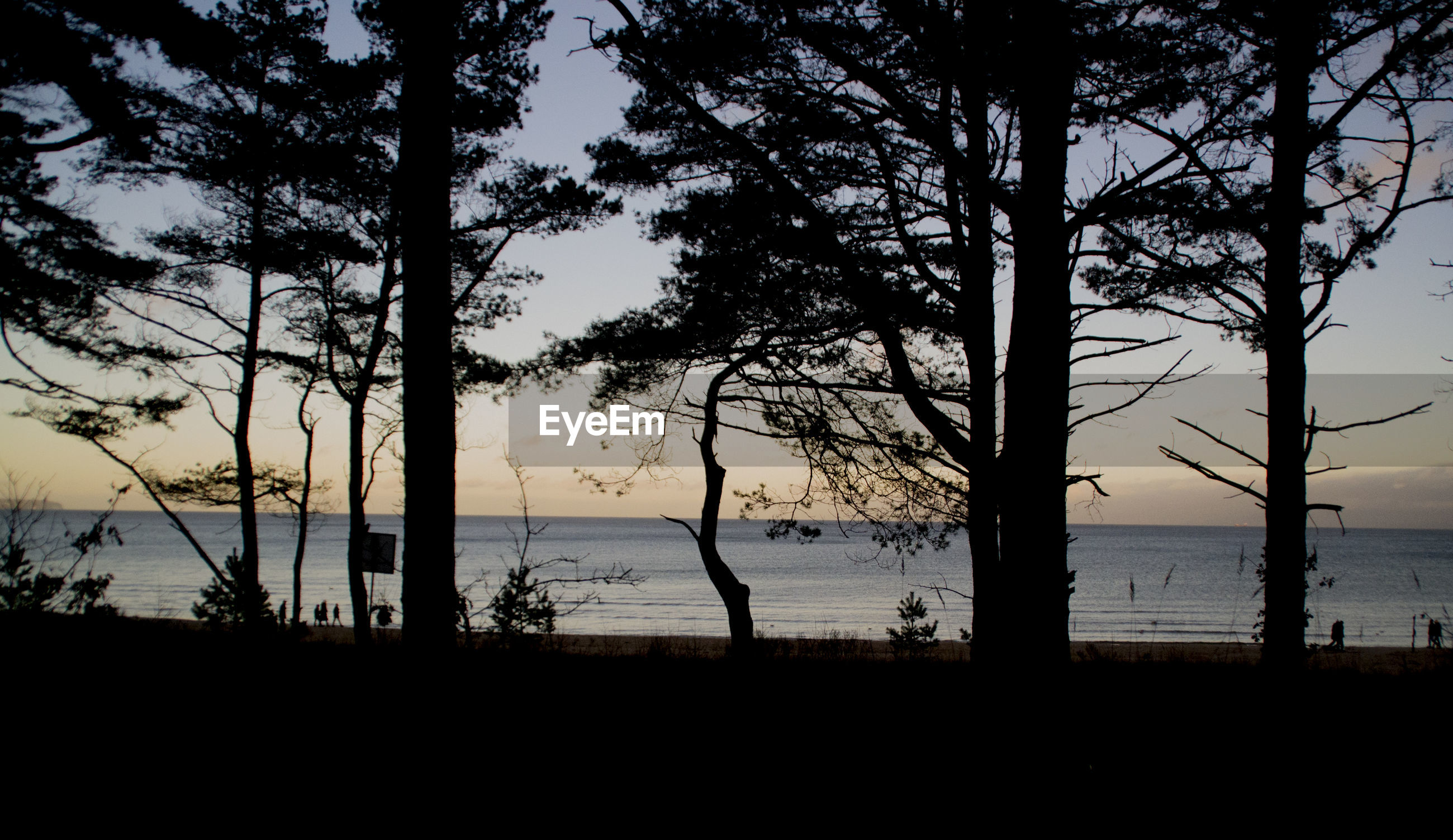 SILHOUETTE TREES AT BEACH AGAINST SKY DURING SUNSET