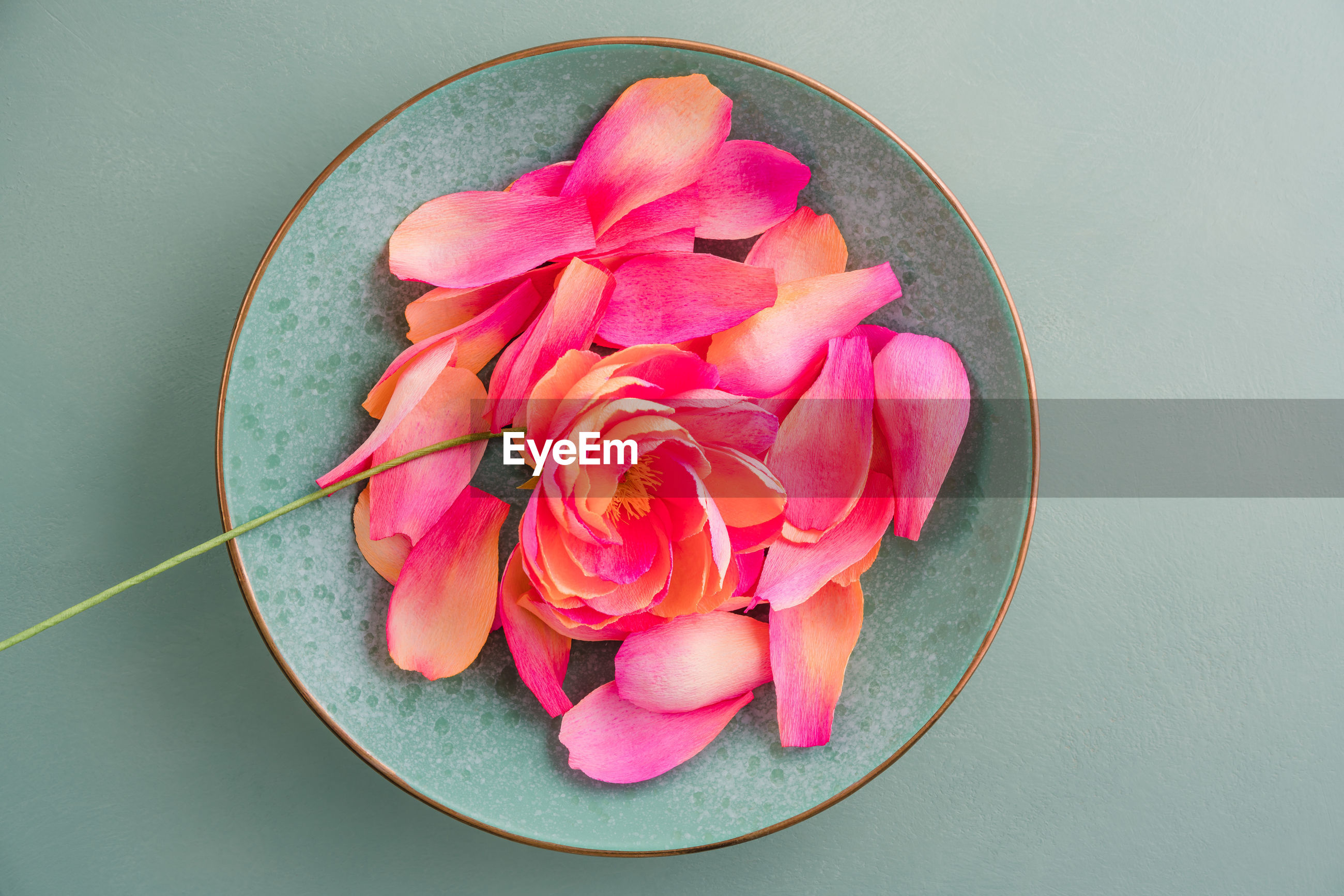 HIGH ANGLE VIEW OF PINK ROSES IN BOWL