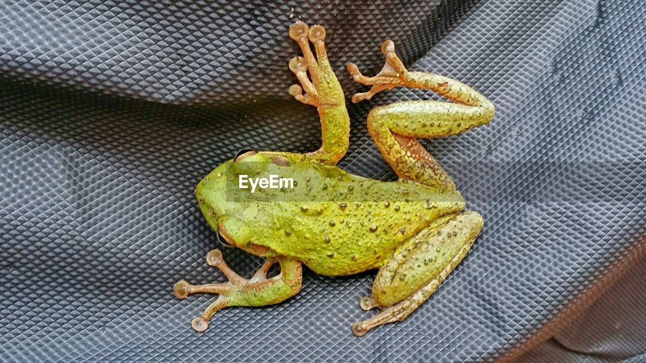 High angle view of frog on exercise mat