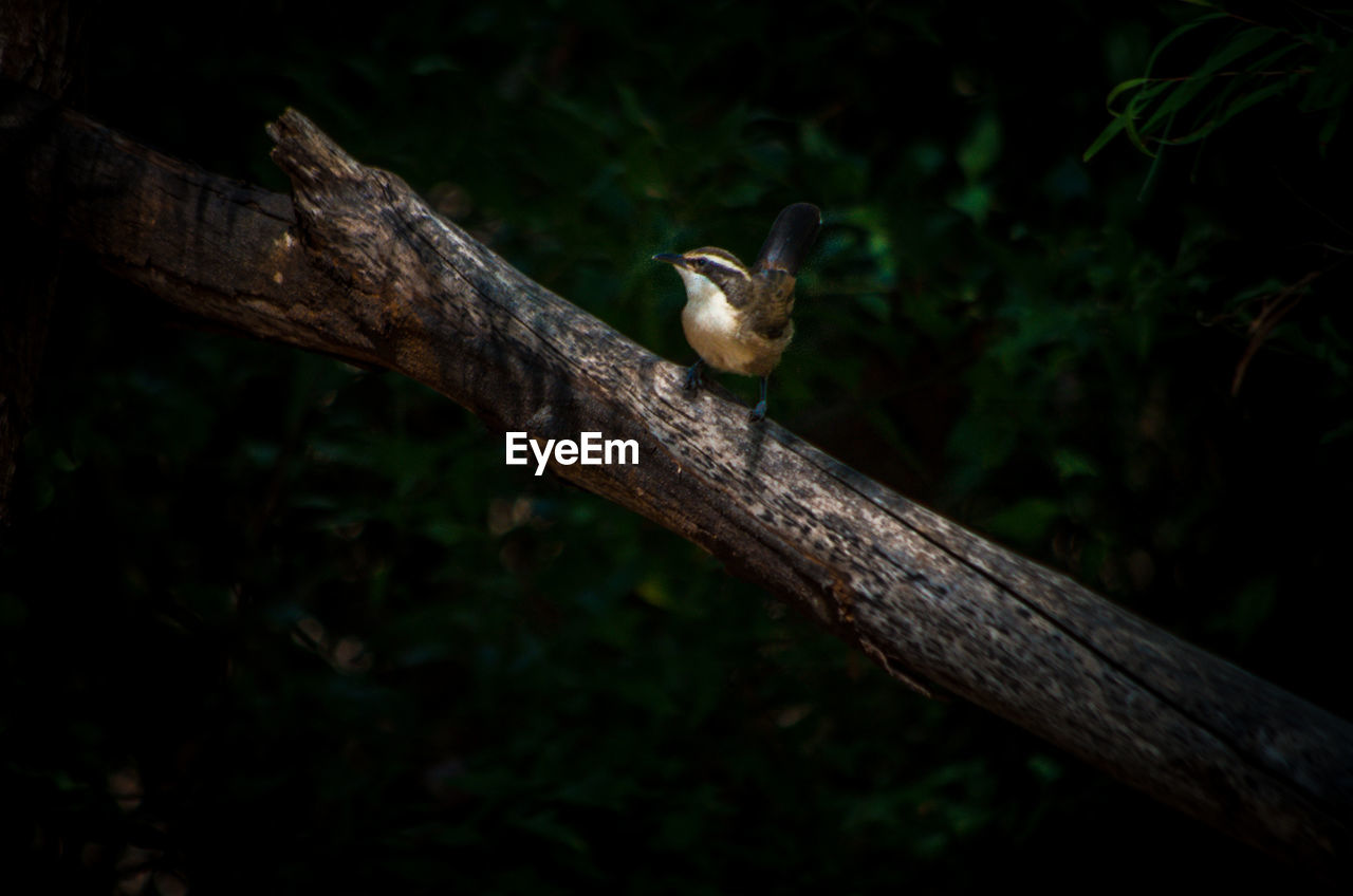 animal, animal wildlife, animal themes, vertebrate, tree, animals in the wild, one animal, bird, plant, perching, no people, nature, wood - material, focus on foreground, branch, day, outdoors, close-up, land, forest