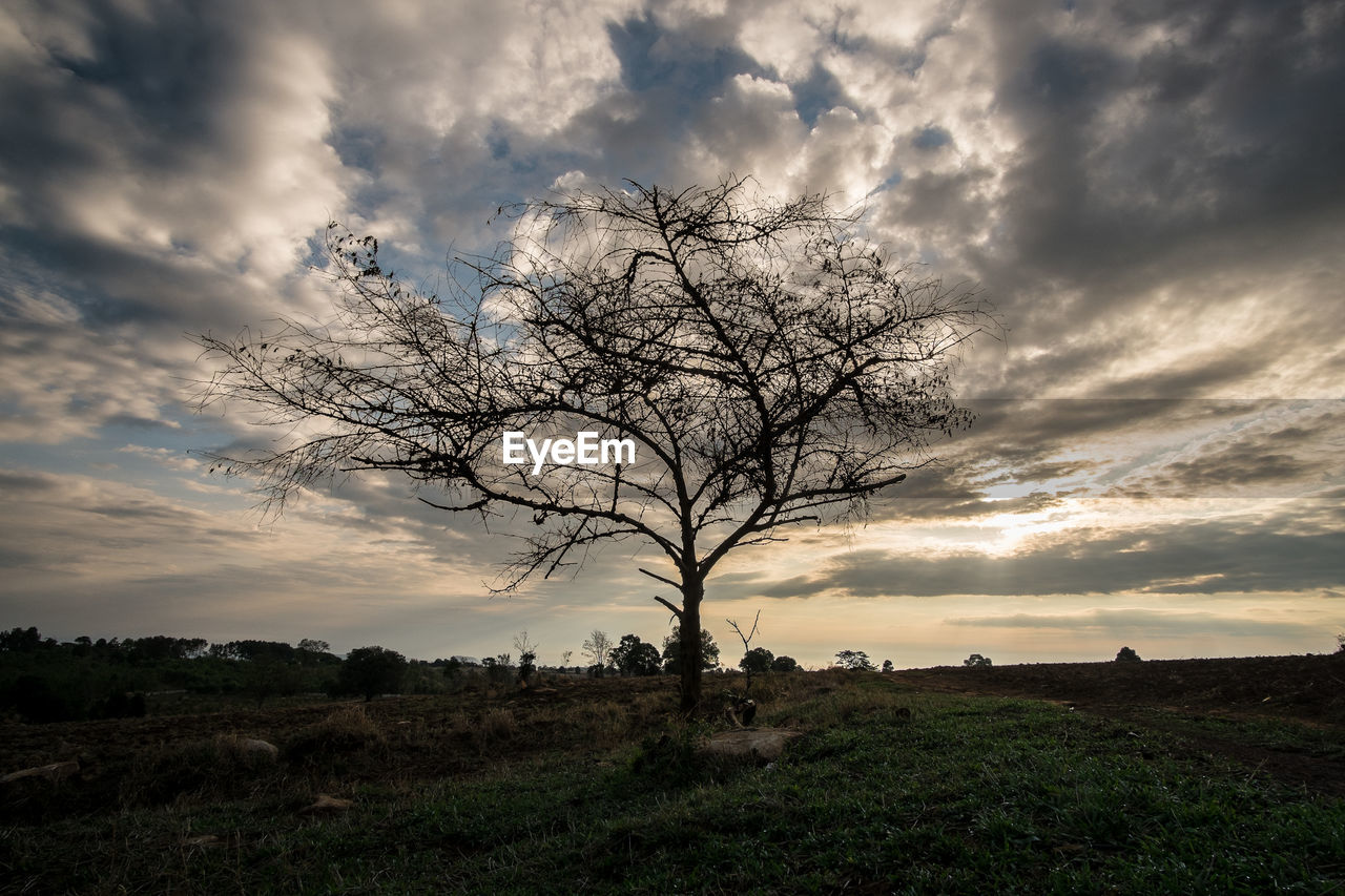 beauty in nature, majestic, lone, tranquility, landscape, tranquil scene, sky, bare tree, nature, tree, scenics, cloud - sky, outdoors, tree trunk, no people, branch, day