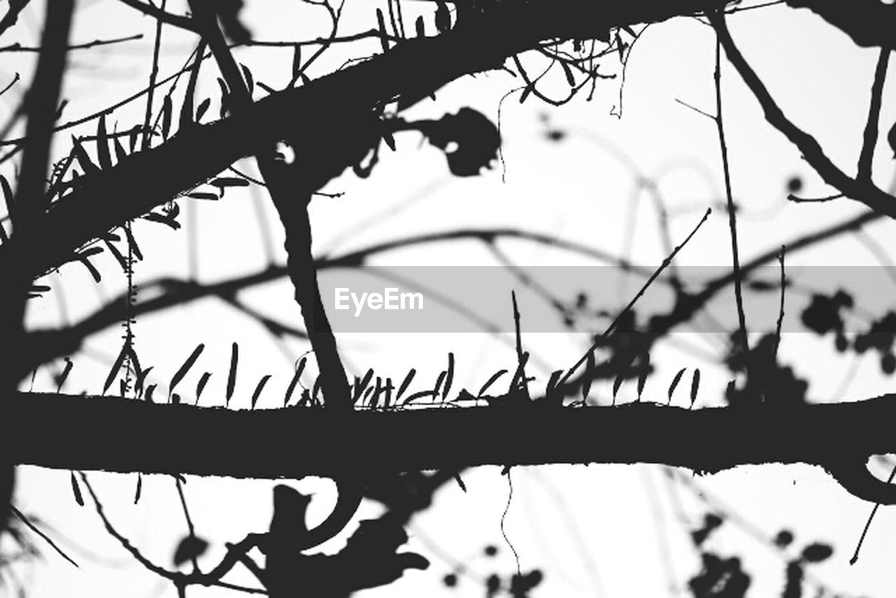 day, silhouette, focus on foreground, branch, no people, nature, outdoors, growth, plant, close-up, tree, beauty in nature, sky