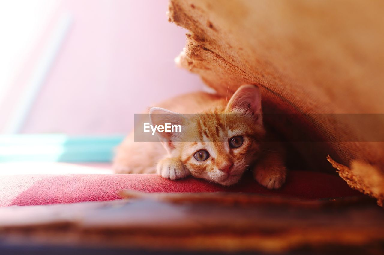 Close-up portrait of kitten relaxing on pet bed