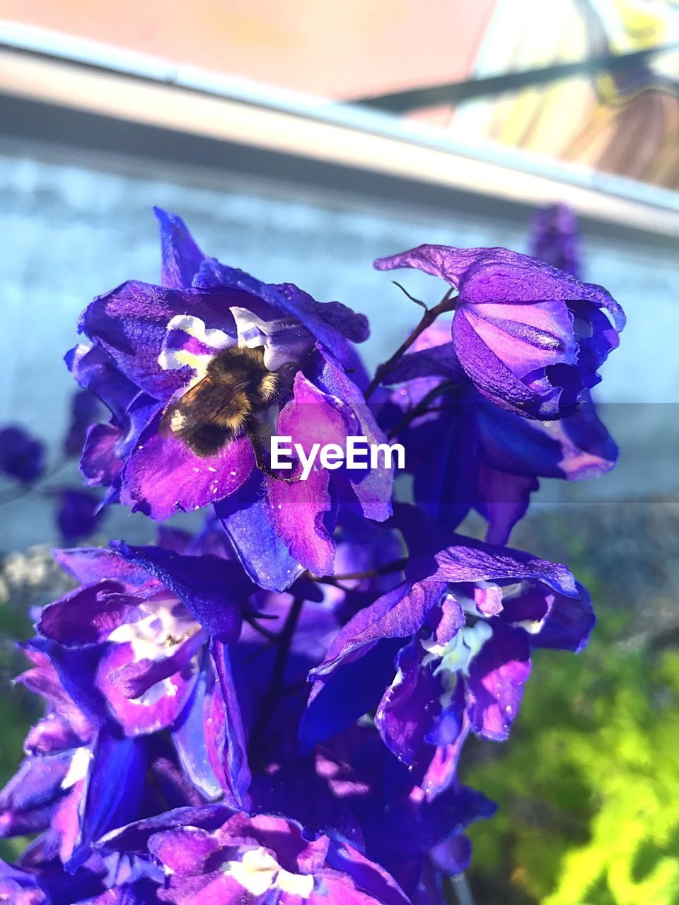 flower, petal, fragility, beauty in nature, nature, flower head, growth, purple, freshness, close-up, no people, day, focus on foreground, plant, outdoors
