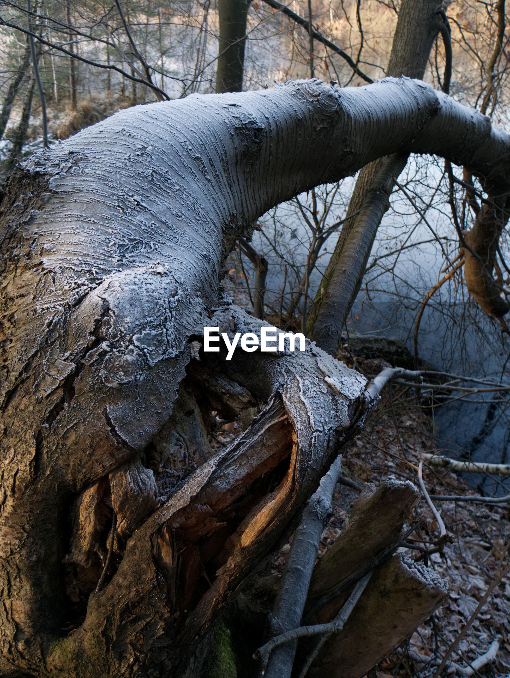 CLOSE-UP OF BARE TREE