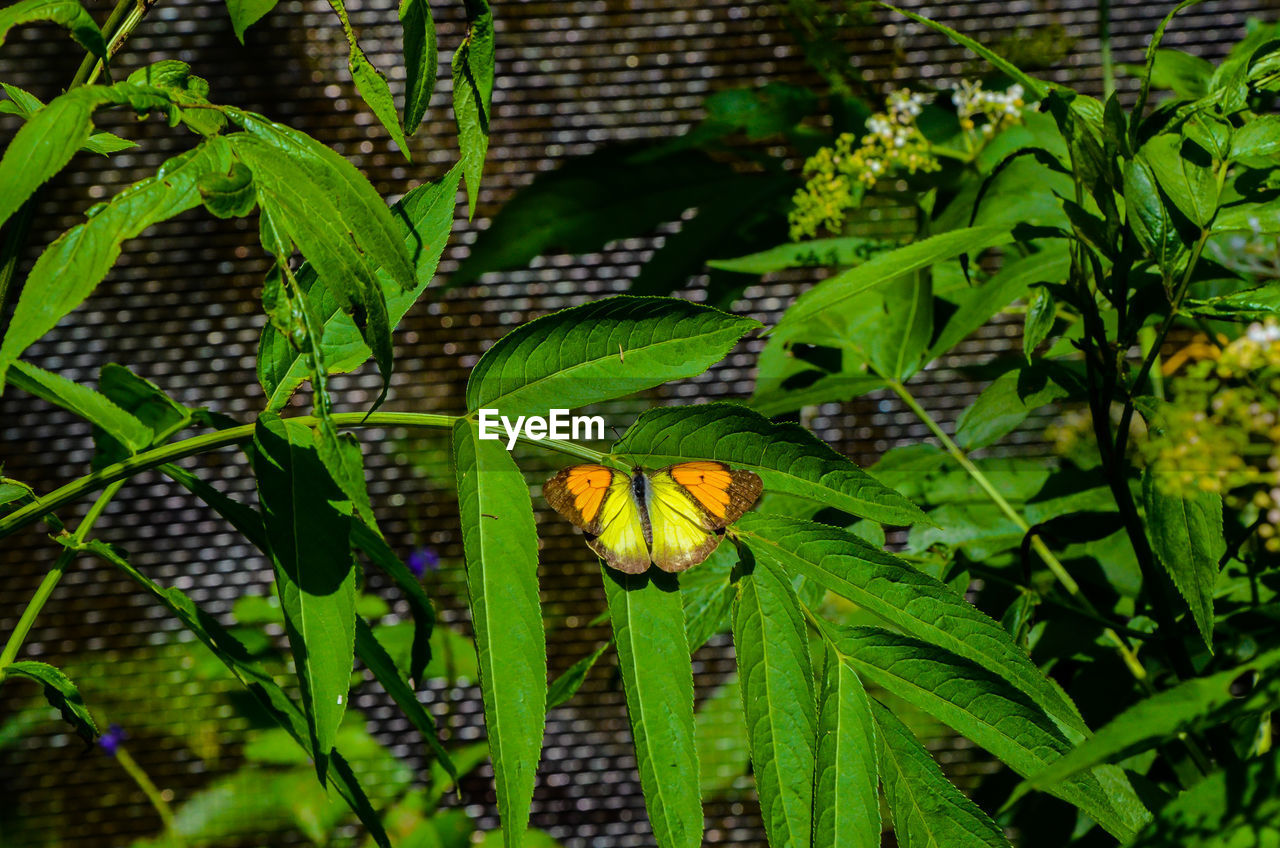 leaf, green color, plant, growth, insect, animals in the wild, nature, one animal, outdoors, animal themes, no people, butterfly - insect, day, animal wildlife, beauty in nature, close-up, fragility, freshness, flower, flower head