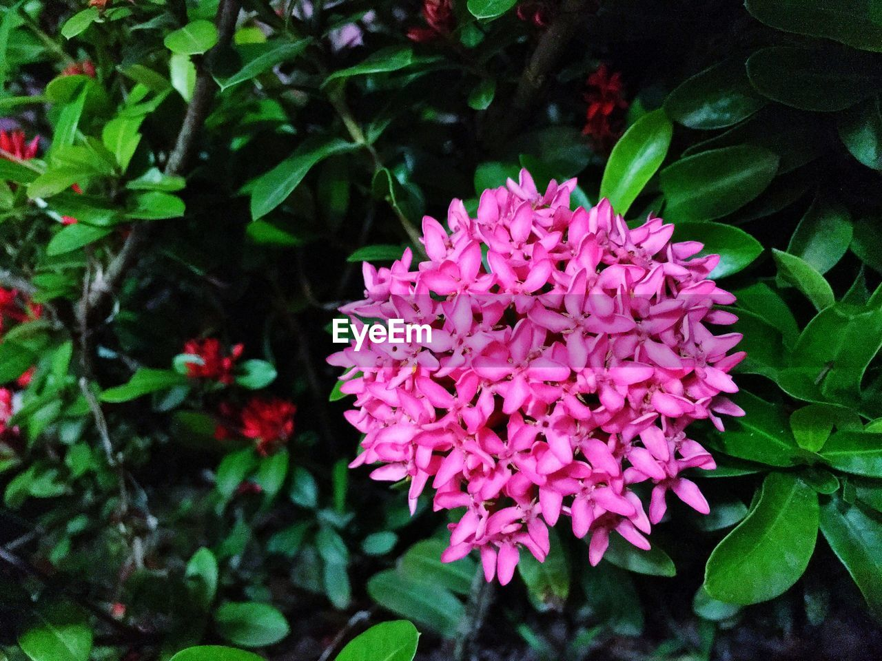 flower, petal, growth, nature, freshness, beauty in nature, fragility, plant, blooming, flower head, leaf, outdoors, day, pink color, no people, close-up