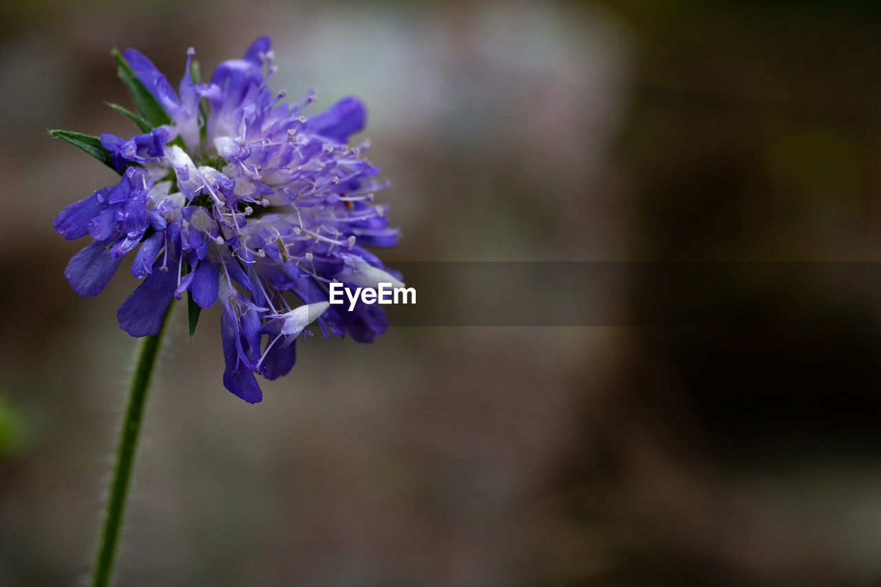 flower, flowering plant, fragility, vulnerability, beauty in nature, freshness, plant, close-up, purple, petal, flower head, growth, focus on foreground, inflorescence, nature, no people, botany, blue, day, outdoors