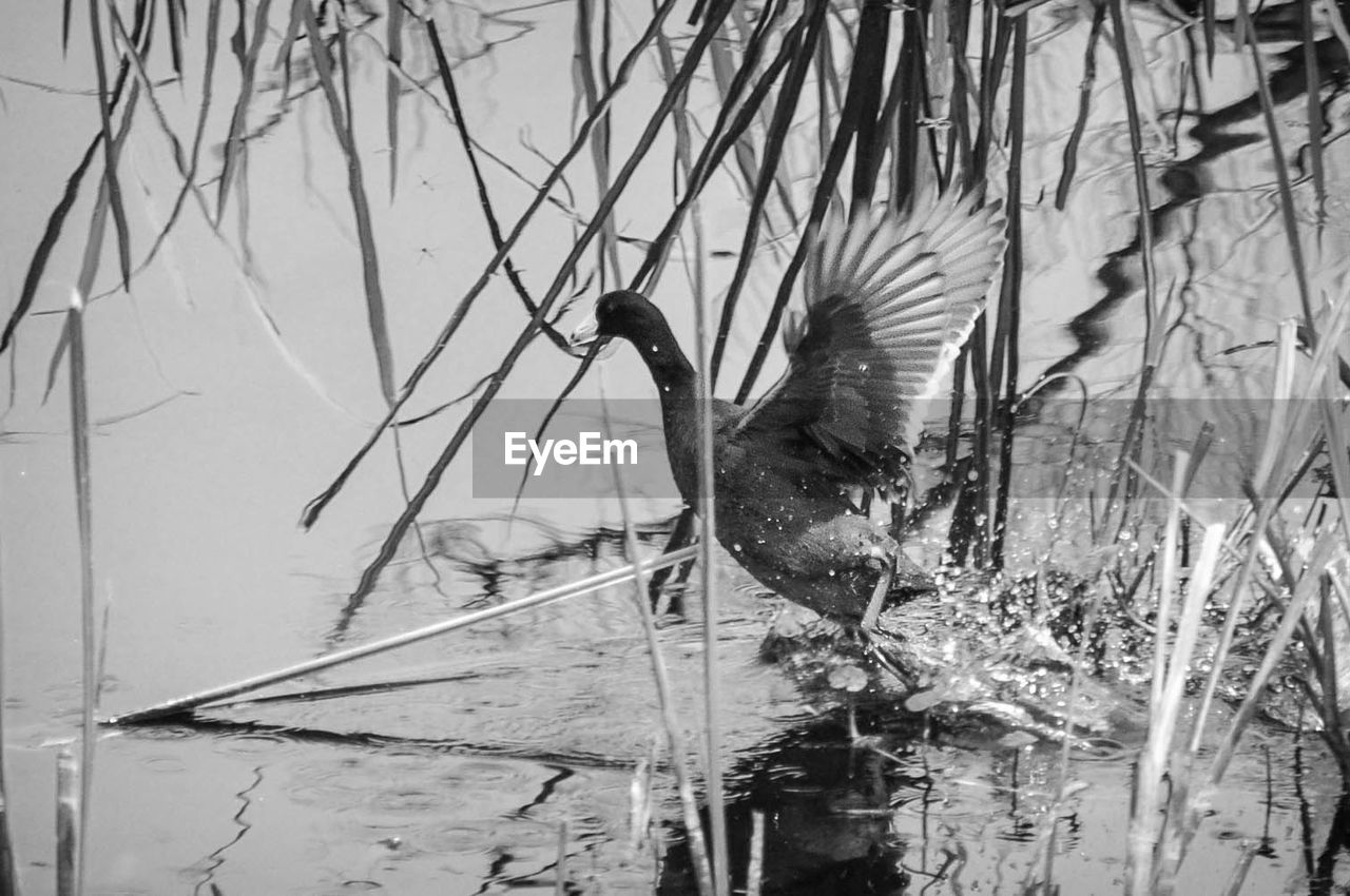 Bird by plants in lake
