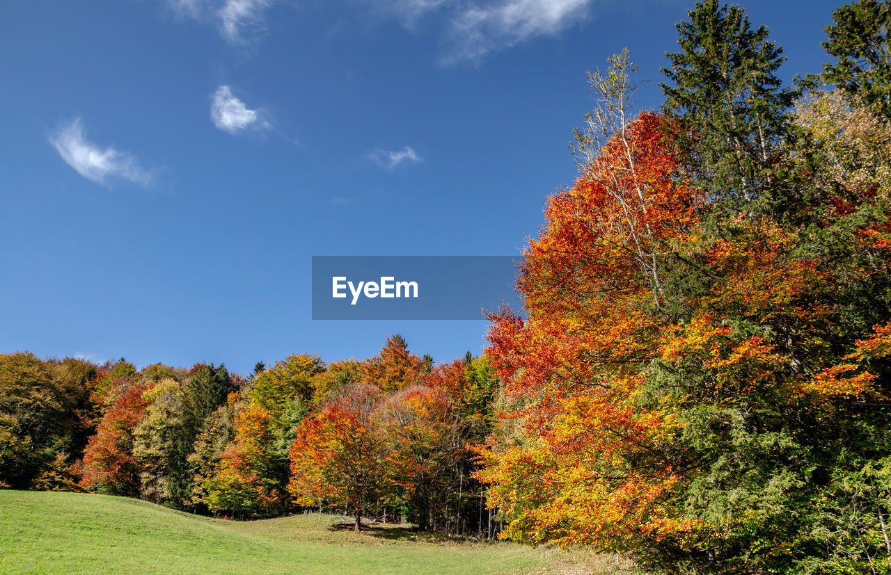 SCENIC VIEW OF AUTUMNAL TREES BY ROAD AGAINST SKY