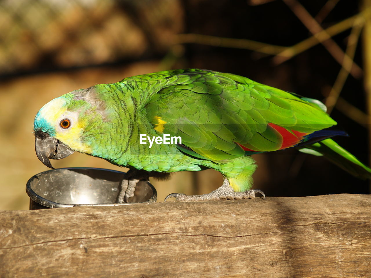 parrot, vertebrate, animal themes, animal, animal wildlife, bird, animals in the wild, green color, one animal, close-up, parakeet, wood - material, perching, no people, nature, focus on foreground, day, outdoors, animals in captivity, cage, beak