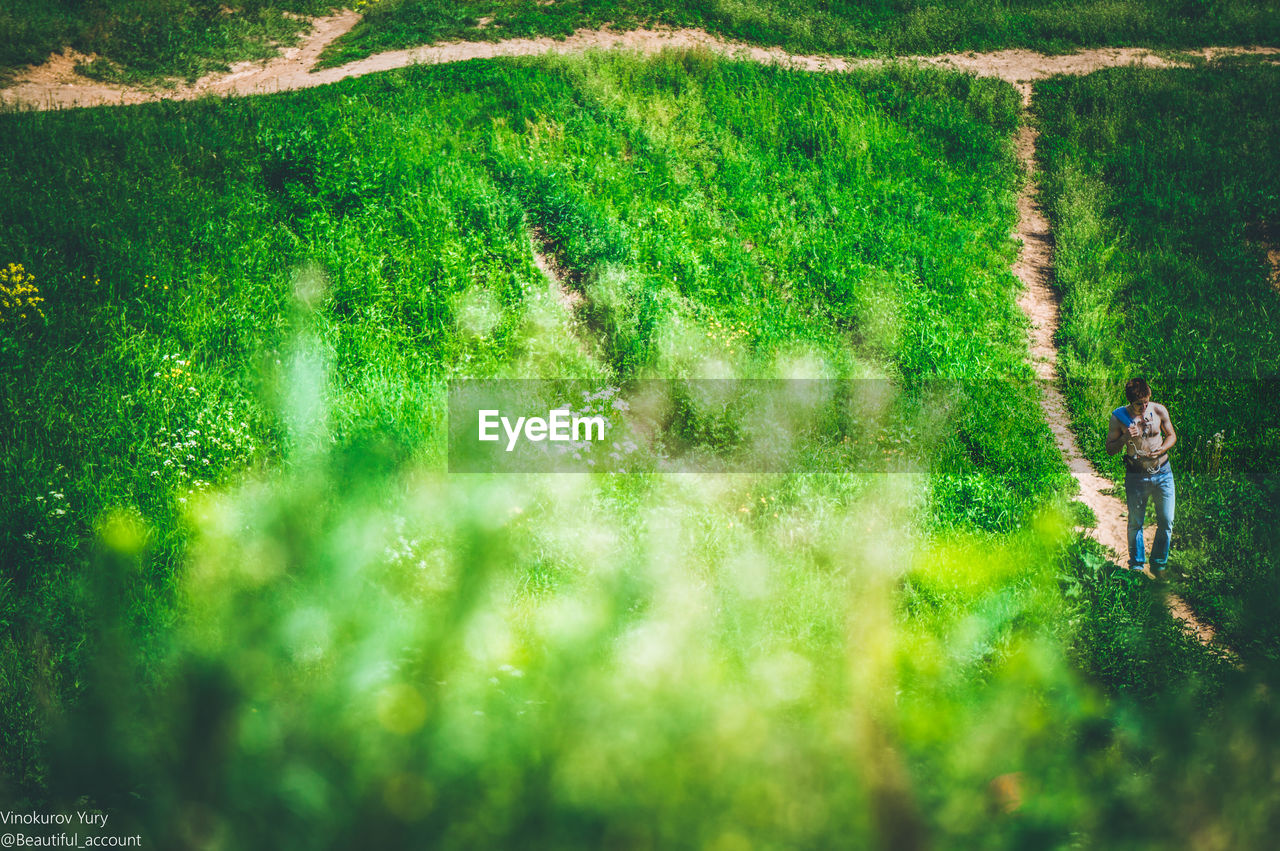 field, grass, growth, nature, green color, high angle view, agriculture, animal themes, mammal, landscape, one animal, day, domestic animals, dog, rural scene, plant, pets, outdoors, beauty in nature, one person, real people, people