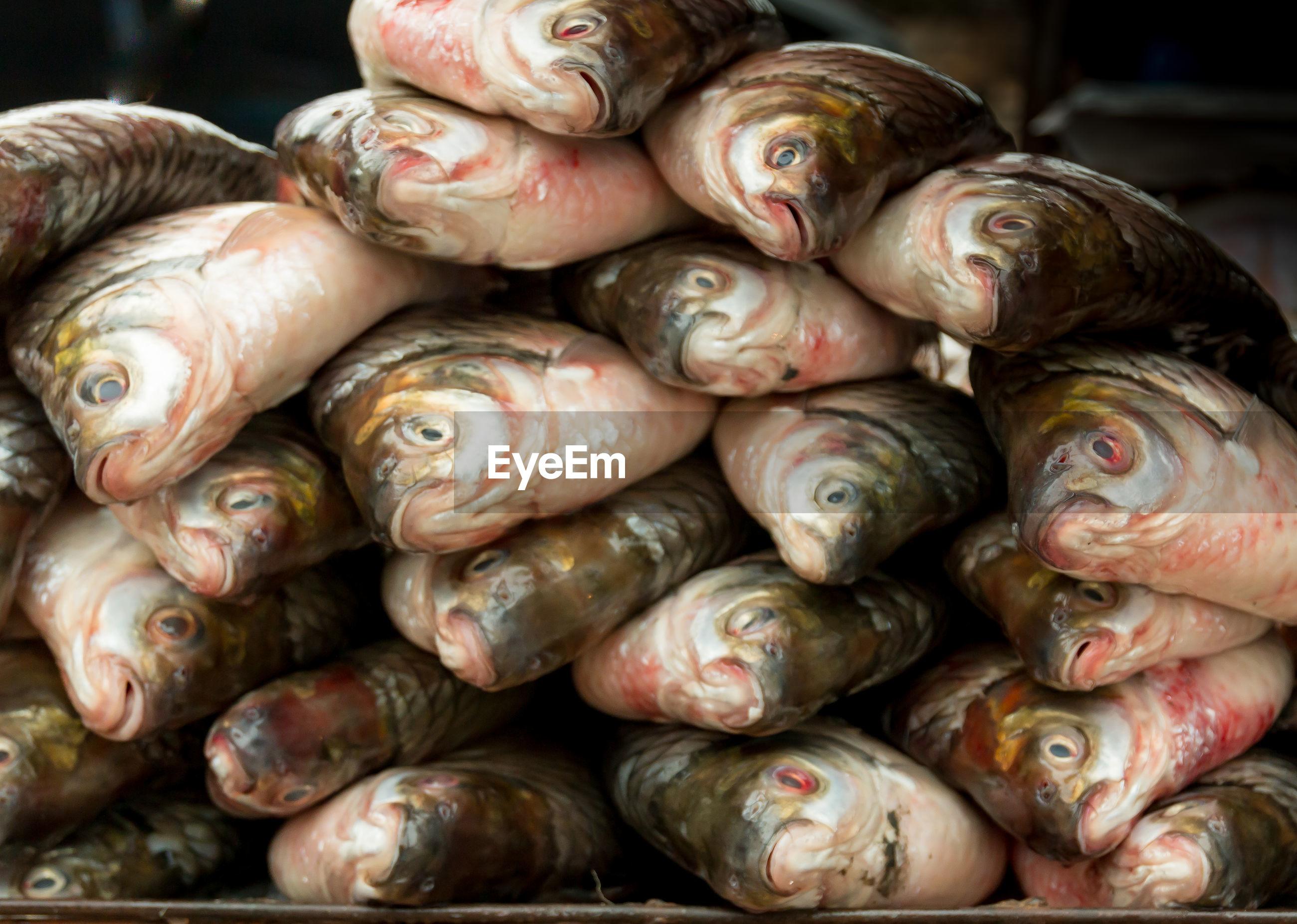Closeup textures of carp to the fish counter