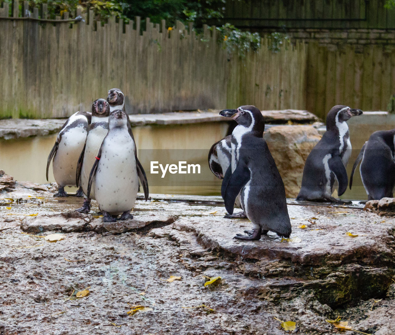 group of animals, animal, animal themes, animal wildlife, vertebrate, animals in the wild, bird, penguin, no people, day, nature, outdoors, land, focus on foreground, medium group of animals, water, solid, animals in captivity, wood - material, three animals