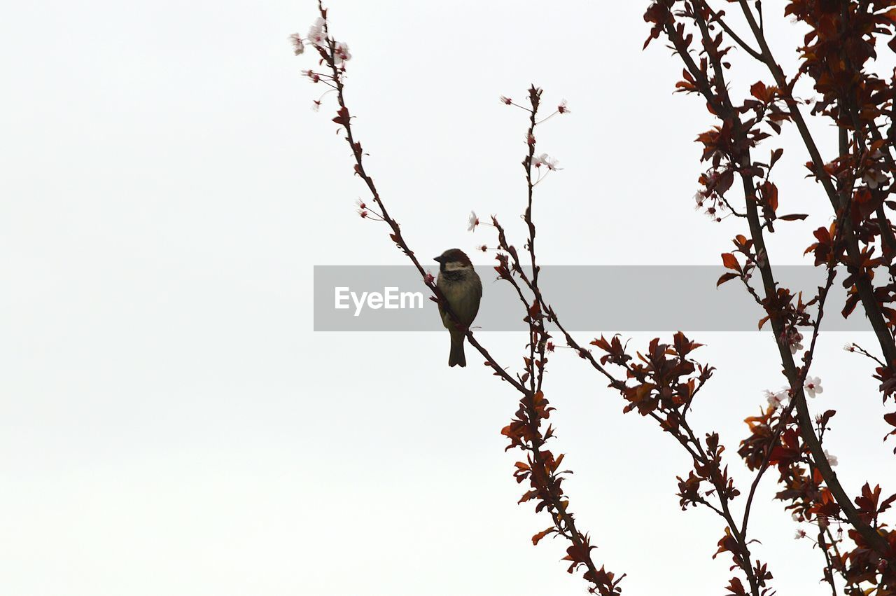 Close-up of bird perching on tree against clear sky