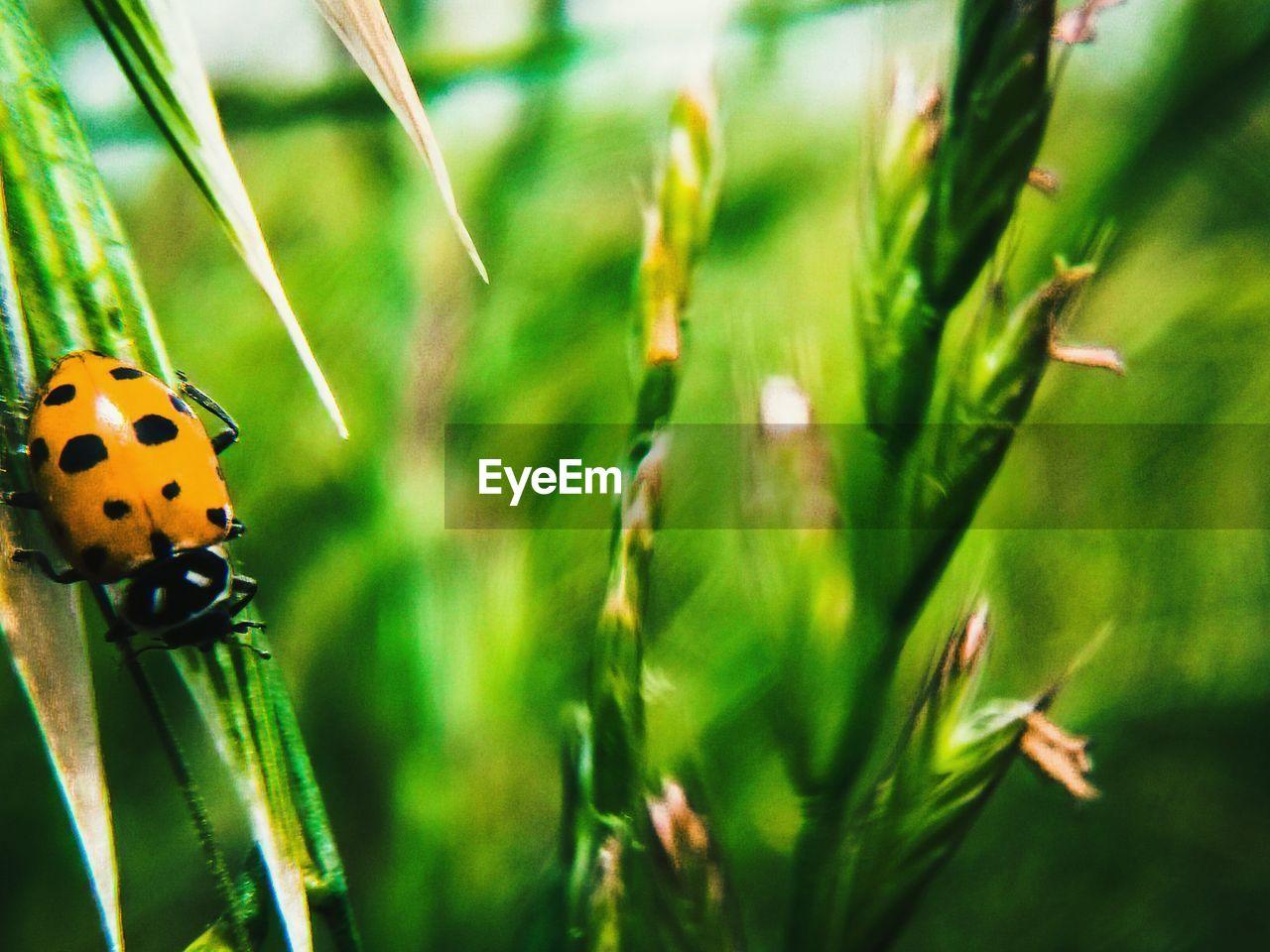 Close-up of ladybug on green plant
