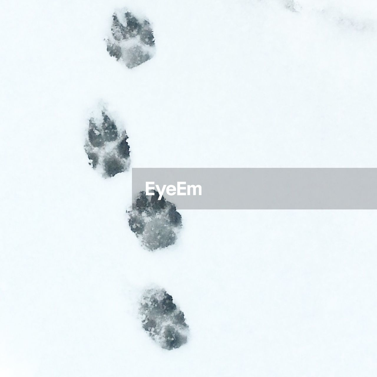 snow, winter, cold temperature, weather, nature, frozen, no people, cold, high angle view, outdoors, day, paw print, field, tranquility, white background, snowing, snowdrift, beauty in nature, animal themes