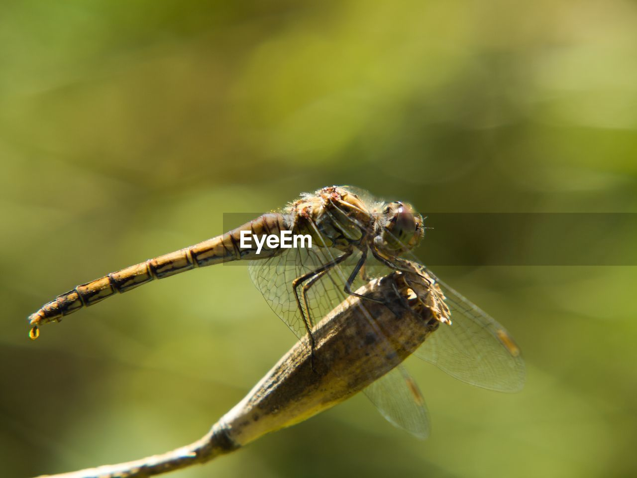 insect, invertebrate, animal themes, animal, animals in the wild, animal wildlife, one animal, close-up, day, animal wing, focus on foreground, selective focus, nature, no people, plant part, plant, zoology, outdoors, leaf, beauty in nature