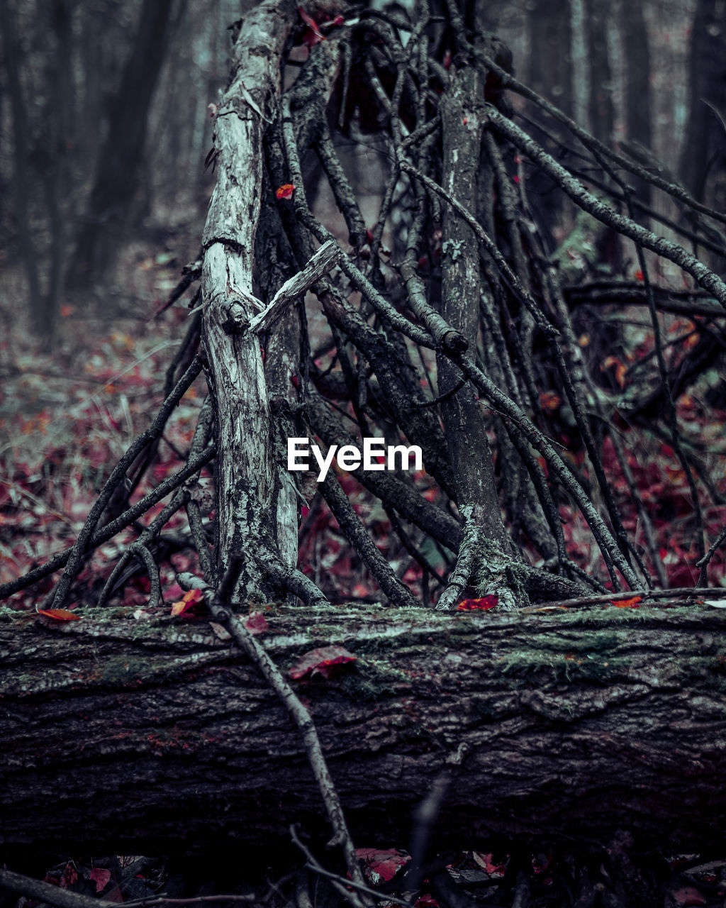 tree, plant, forest, land, nature, no people, day, branch, trunk, tree trunk, woodland, focus on foreground, tranquility, growth, outdoors, beauty in nature, selective focus, close-up, moss, plant part, tangled