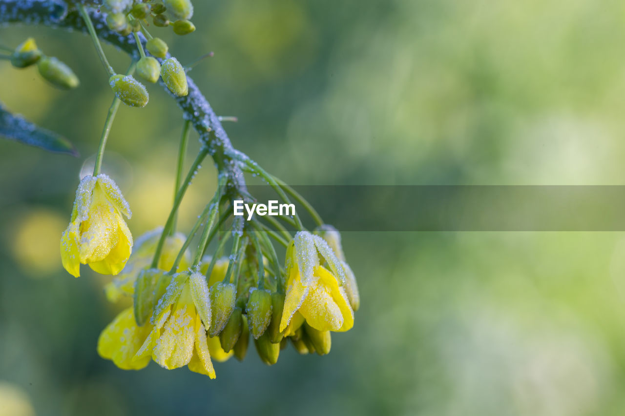 green color, growth, nature, beauty in nature, plant, flower, focus on foreground, day, yellow, no people, close-up, outdoors, fragility, catkin, freshness, flower head