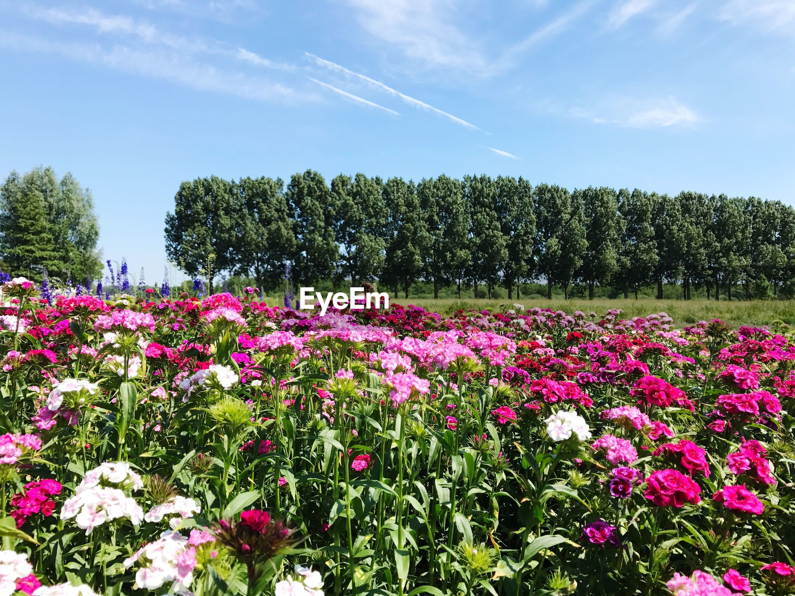 VIEW OF FLOWERS GROWING ON FIELD