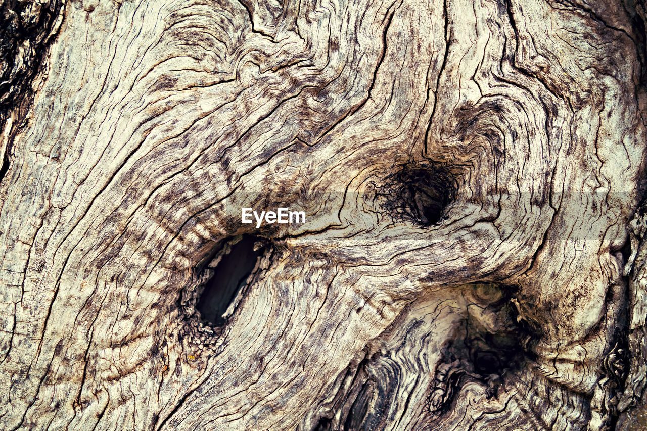 tree, textured, tree trunk, full frame, trunk, close-up, wood - material, pattern, backgrounds, natural pattern, plant, no people, bark, rough, day, knotted wood, nature, plant bark, wood, outdoors, wood grain, tree ring