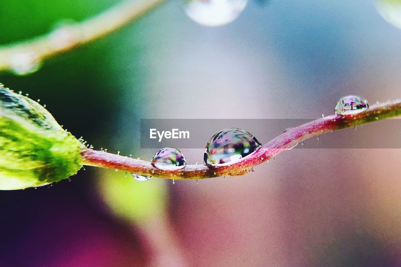 nature, fragility, close-up, focus on foreground, plant, beauty in nature, animals in the wild, no people, day, outdoors, animal themes