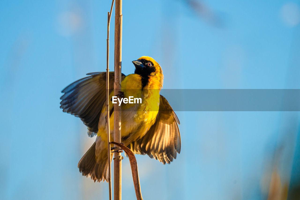 Bird perching on twig against blue sky