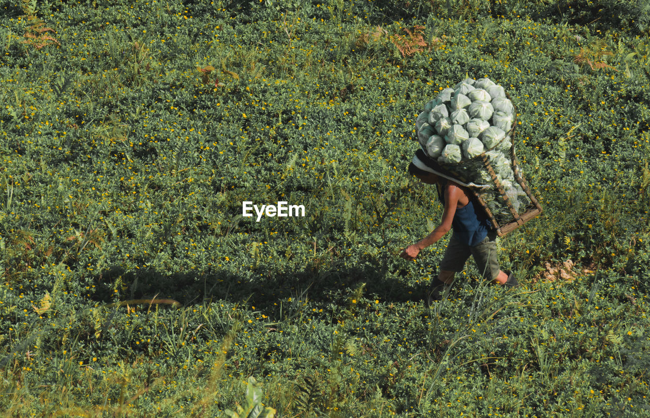 plant, one person, land, working, rural scene, nature, occupation, farm, day, agriculture, green color, landscape, real people, field, crop, full length, growth, farmer, food, outdoors, farm worker, tea leaves