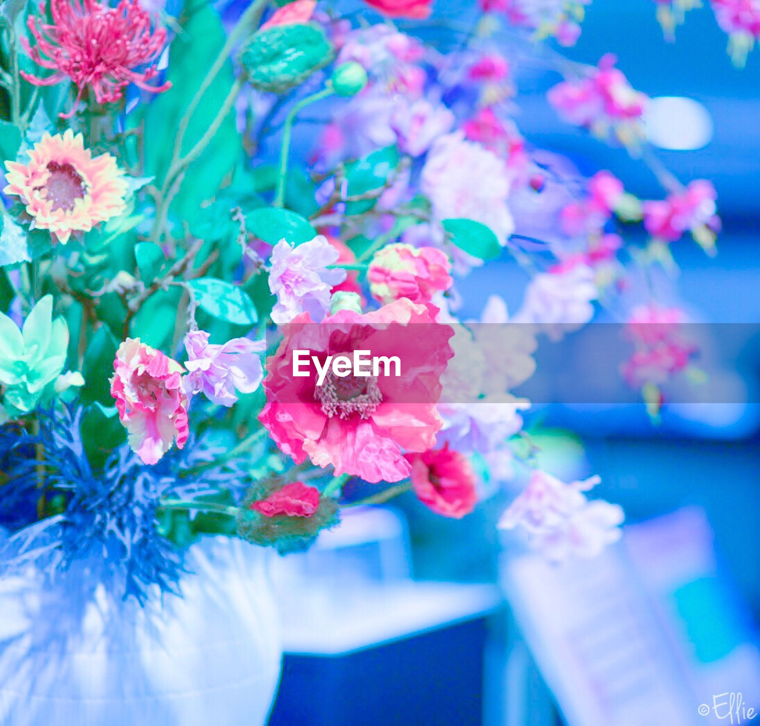 flower, fragility, nature, freshness, beauty in nature, petal, plant, day, flower head, close-up, outdoors, no people, water