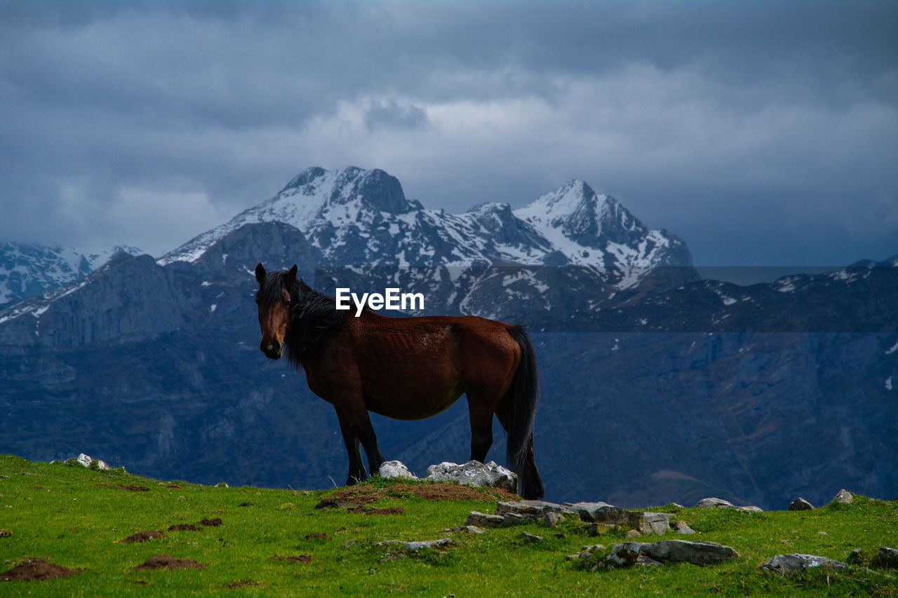 Horse on grass by snowcapped mountain against sky