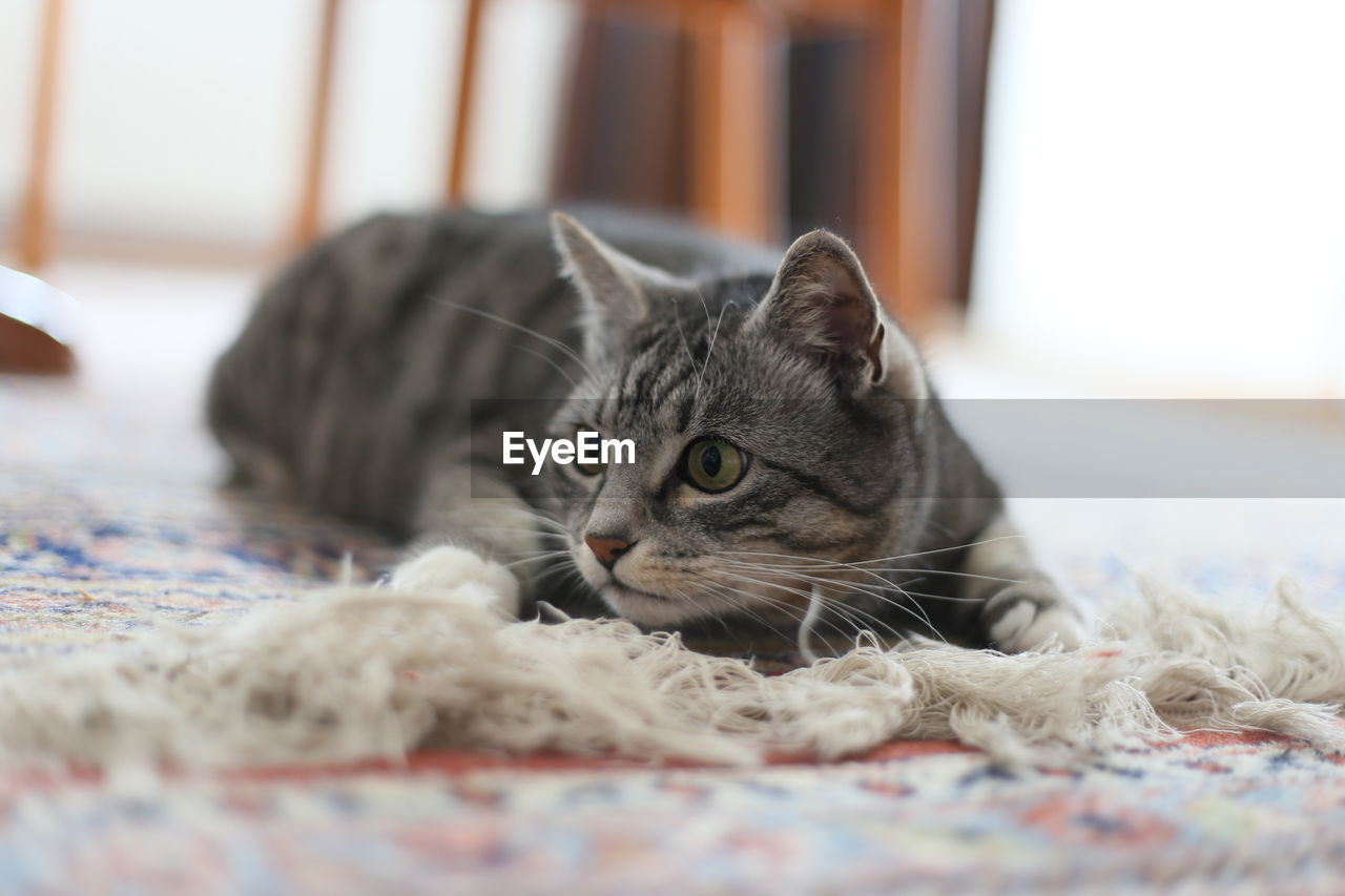 Cat sitting on rug at home
