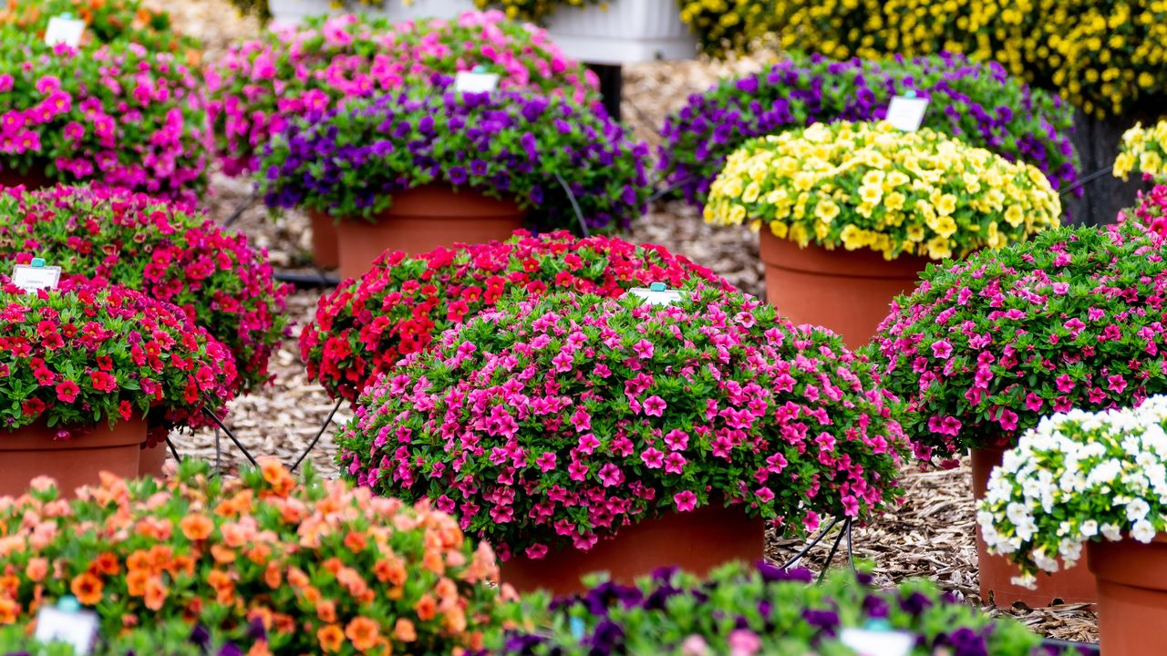 plant, flowering plant, freshness, flower, vulnerability, fragility, growth, multi colored, no people, retail, close-up, beauty in nature, business, variation, nature, for sale, selective focus, choice, abundance, pink color, outdoors, retail display, flower head, flower pot, consumerism