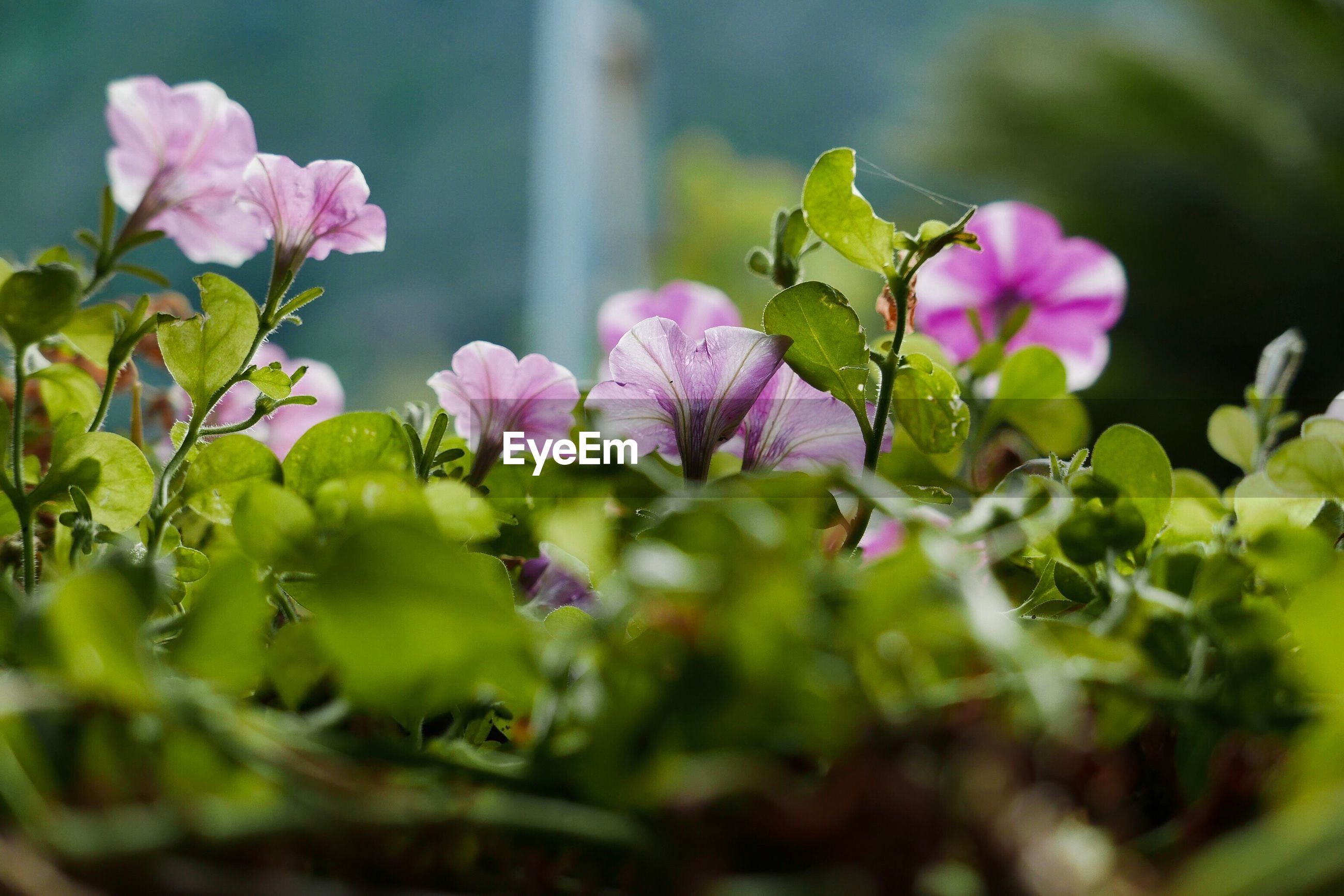 flower, growth, plant, nature, beauty in nature, selective focus, fragility, leaf, no people, outdoors, green color, petal, freshness, day, close-up, blooming, flower head