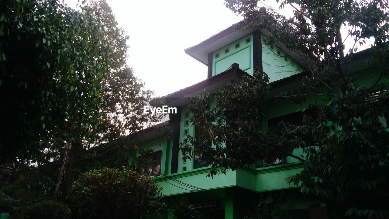 plant, built structure, architecture, building exterior, tree, building, house, nature, growth, residential district, no people, low angle view, day, outdoors, sky, green color, ivy, birdhouse, clear sky, beauty in nature