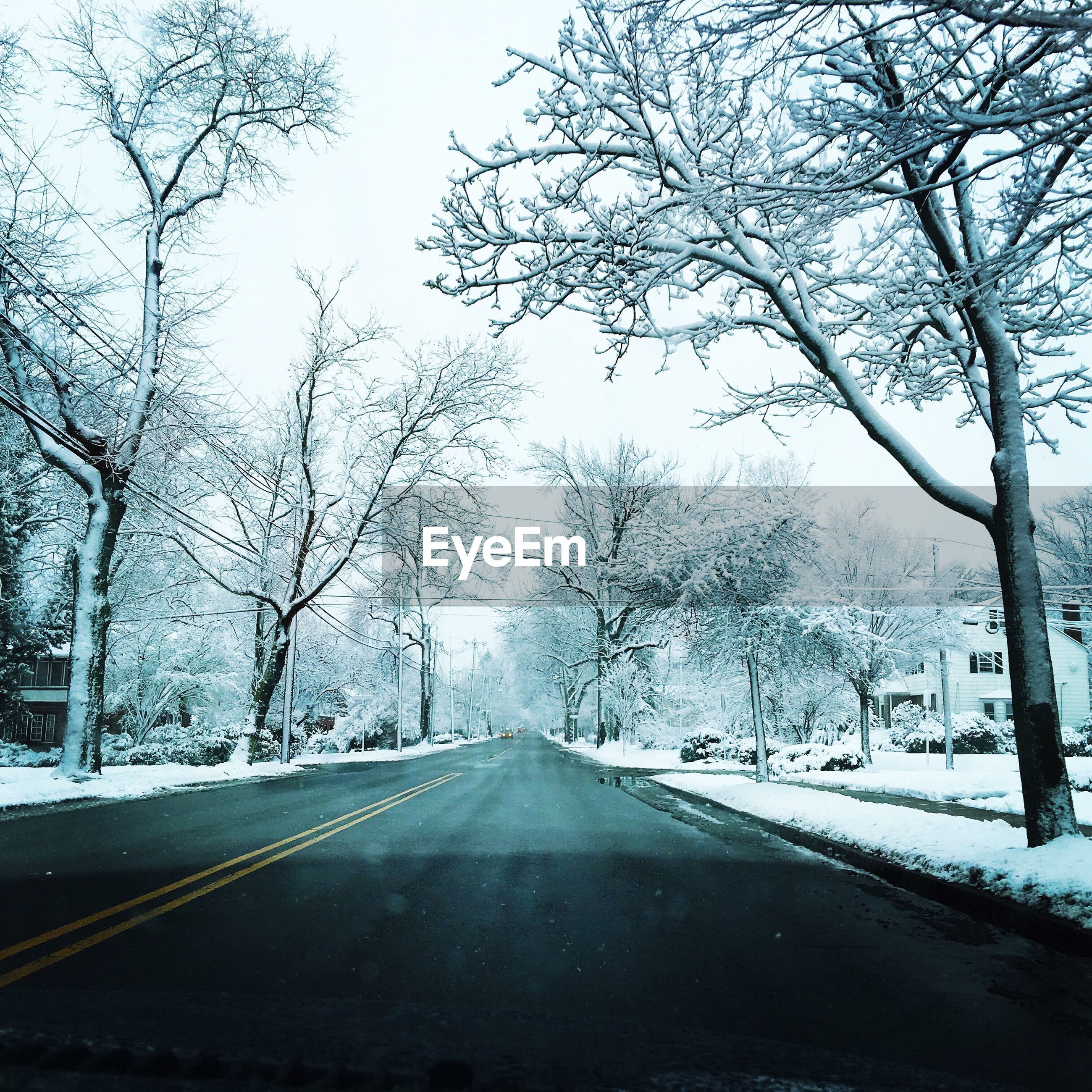 the way forward, transportation, tree, road, diminishing perspective, snow, bare tree, vanishing point, winter, cold temperature, road marking, empty road, season, street, weather, country road, empty, clear sky, nature, branch