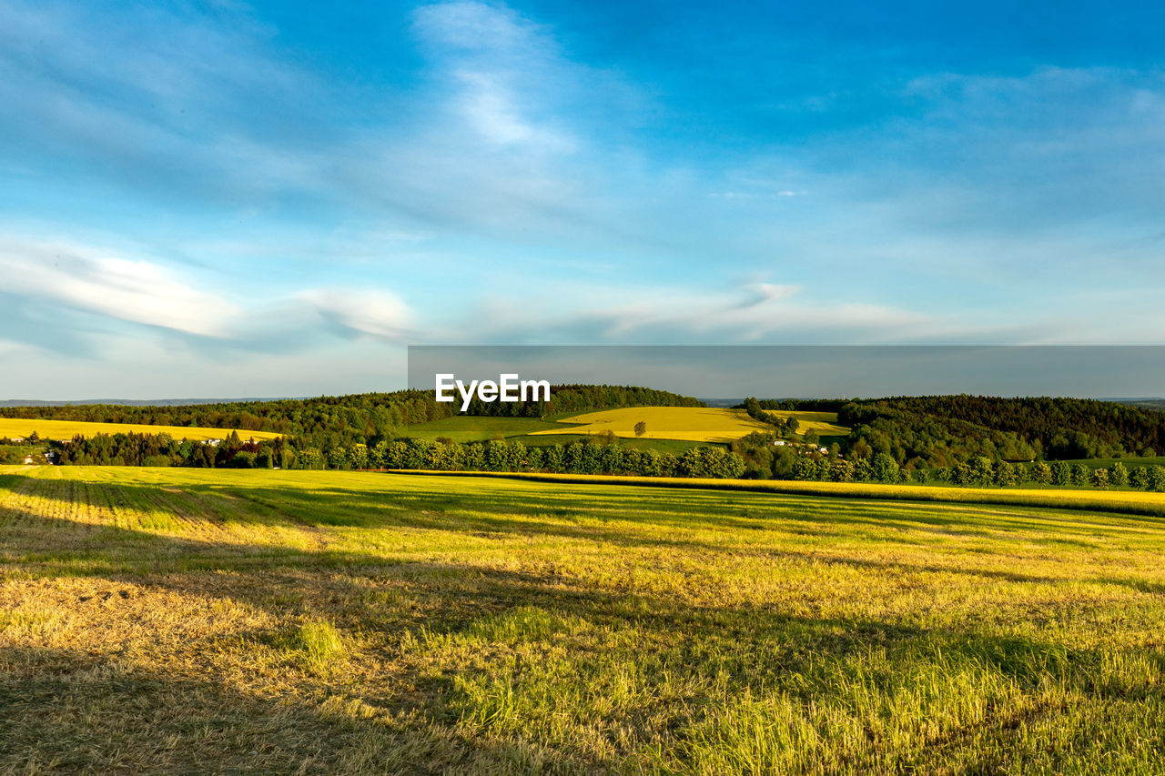 sky, scenics - nature, tranquil scene, beauty in nature, tranquility, cloud - sky, environment, landscape, green color, grass, plant, land, field, no people, nature, non-urban scene, yellow, idyllic, day, sunlight, outdoors, rolling landscape